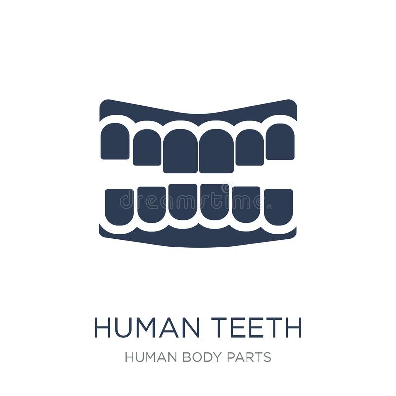 Human Teeth icon. Trendy flat vector Human Teeth icon on white b. Ackground from Human Body Parts collection, vector illustration can be use for web and mobile royalty free illustration