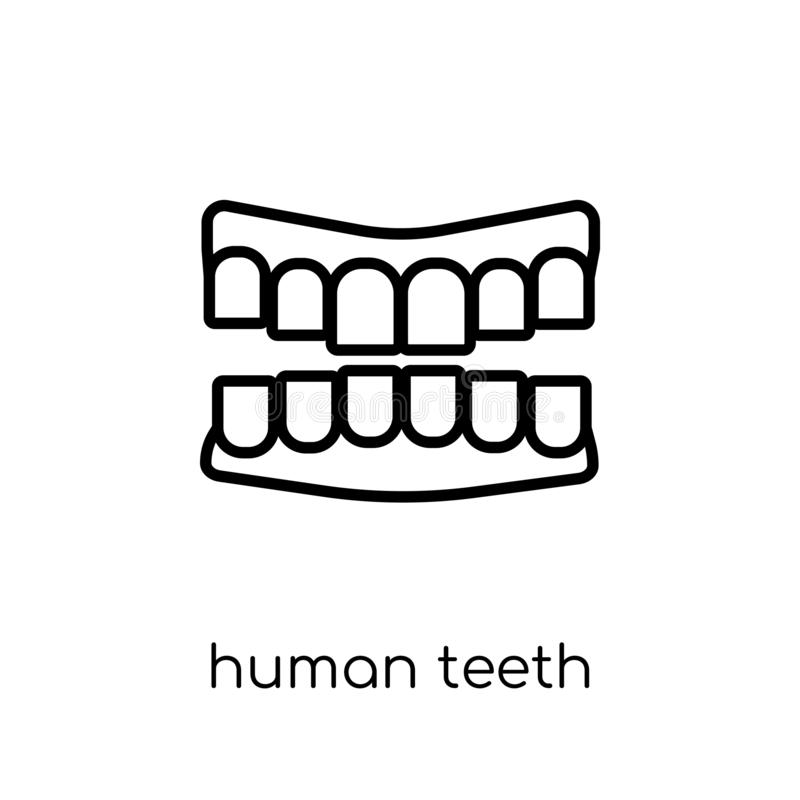 Human Teeth icon. Trendy modern flat linear vector Human Teeth i. Con on white background from thin line Human Body Parts collection, editable outline stroke royalty free illustration